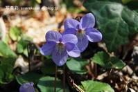 植物園に行く3月 - 写楽彩