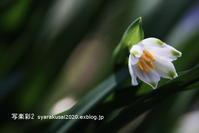 植物園に行く3月-5 - 写楽彩2
