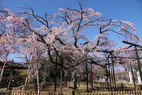 ご近所の桜原木山妙行寺 - イーハトーブ・ガーデン