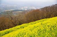 菜の花の高原 - 風の香に誘われて 風景のふぉと缶