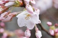 棚から牡丹餅? - 千葉県いすみ環境と文化のさとセンター