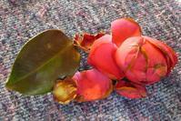 花びらを数える - そらいろのパレット