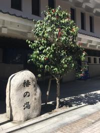 春の松山旅2 - ホリー・ゴライトリーな日々