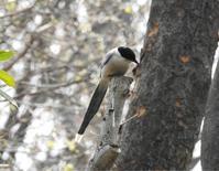 オナガほか@新宿中央公園 - 青爺の野鳥日記