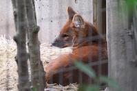 ドールたちの春 - 動物園に嵌り中