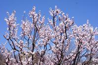 薬草園の春の花いろいろ - さんじゃらっと☆blog2