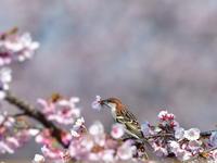 花弁を咥えて - 季節の映ろひ