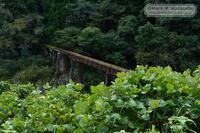 内大臣森林鉄道鉄橋跡 - Mark.M.Watanabeの熊本撮影紀行