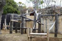 よこはま動物園ズーラシア2019年3月21日その1 - お散歩ふぉと2