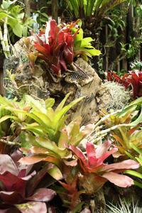 ナゴパイナップルパーク~南国情緒と戦禍の爪痕に触れた沖縄の旅#7~ - 風の彩り-2