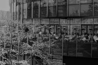 ミッドタウンの桜 - Taro's Photo