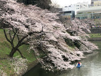 卒業式 武道館 - 浦安フォト日記