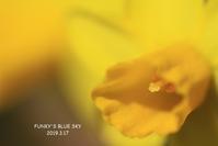 3月の庭*** - FUNKY'S BLUE SKY