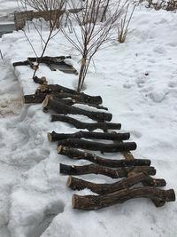 きのこの話・・ほだ木の調達 - あいやばばライフ