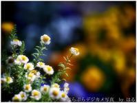 春はここに(2) - ぶらぶらデジカメ写真 by はる