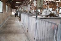朝の検温 - 小比類巻家畜診療サービス スタッフの牧場日誌