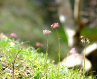 小さな花たち - 長い木の橋