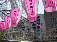 去年と今年の目黒川の桜♪目黒川のほとりでお弁当食べるところを探してみた♪ - ルソイの半バックパッカー旅