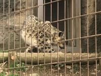 多摩動物公園で女子会−2 - 青山ぱせり日記
