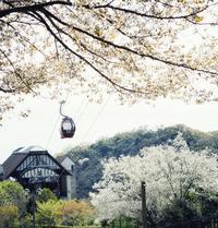 4/6(土)より山桜カフェを開催します! - 神戸布引ハーブ園 ハーブガイド ハーブ花ごよみ