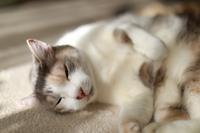 おヒゲが薄い猫 - きょうだい猫と仲良し暮らし