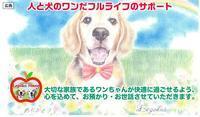情報モニターでCM開始💕 - ビーグル犬フロドのひとりごと