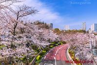 東京ミッドタウンの桜七分咲 - 風景写真家 鐘ヶ江道彦のフォトブログ