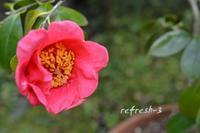 庭散歩日和 - refresh-3