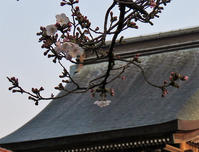 三瓶山西の原火入れ(野焼き) - 清治の花便り