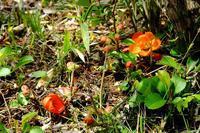春の陽気、散歩で花を <3>白い蛙がいた - ぶらり散歩 ~四季折々フォト日記~