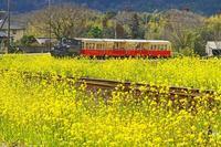 トロッコ列車2019-04-17更新 - 夕陽に魅せられて・・・