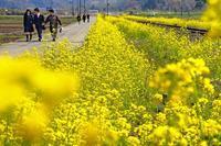春のローカル鉄道2019-04-18更新 - 夕陽に魅せられて・・・