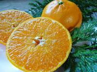 究極の柑橘「せとか」平成29年度も大好評!今期発送予定分カウントダウンです!ご注文はお急ぎください! - FLCパートナーズストア