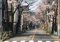 933月28日(木曜日)かんかん森通りの桜並木 - 荒川区百景、再発見