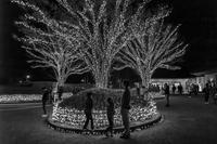 春休み - え~えふ写真館
