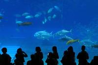 美ら海水族館~南国情緒と戦禍の爪痕に触れた沖縄の旅#8~ - 風の彩り-2