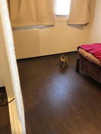かわいそう - 賃貸ネコ暮らし|賃貸住宅でネコを室内飼いする工夫