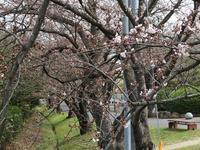 桜並木 - よもやま日記書いてます。