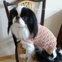 犬セーター☆草木染コットン糸 - 狆の茶々丸
