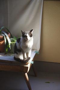 最近の猫事情62 - 鳥会えず猫生活