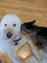 猫のクローズは義理母宅にお泊り - 続 カナダ ON州ロンドンより   楽しい家族 And ネイル