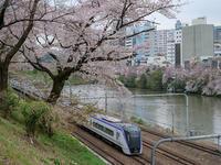 桜と撮り鉄 - 風任せ自由人