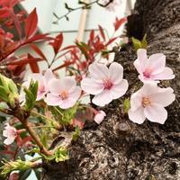 春は好き、でもね・・・^_^v - ~おざなりholiday's^^v~ <フィルムカメラの写真のブログ>