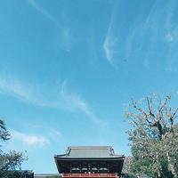 鎌倉の梅見納め散歩早春鎌倉散歩19.03.09 13:44 - スナップ寅さんの「日々是口実」