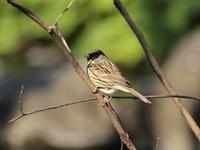 『木曽川水園で出逢った鳥達~』 - 自然風の自然風だより