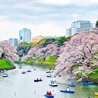 千鳥ヶ淵の桜と、オープンハウス - NLd-Diary