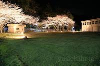 けいちゅうの夜桜 - みちはた写真館フォトギャラリー