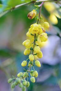 3/28香りの花木 - 「あなたに似た花。」