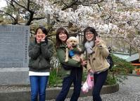 孫娘たちと八鶴湖の花見へ - 東金、折々の風景