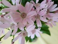 お花倶楽部4月、5月、6月 - HANATSUDOI